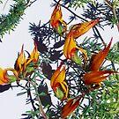 1705-beautiful flowers by elvira1