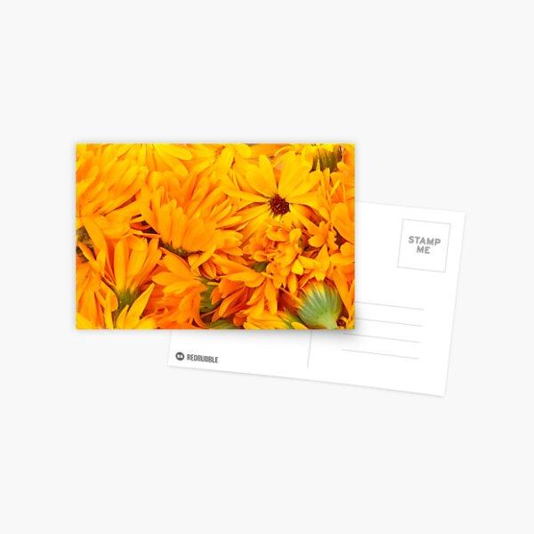 Ringelblume Postkarte