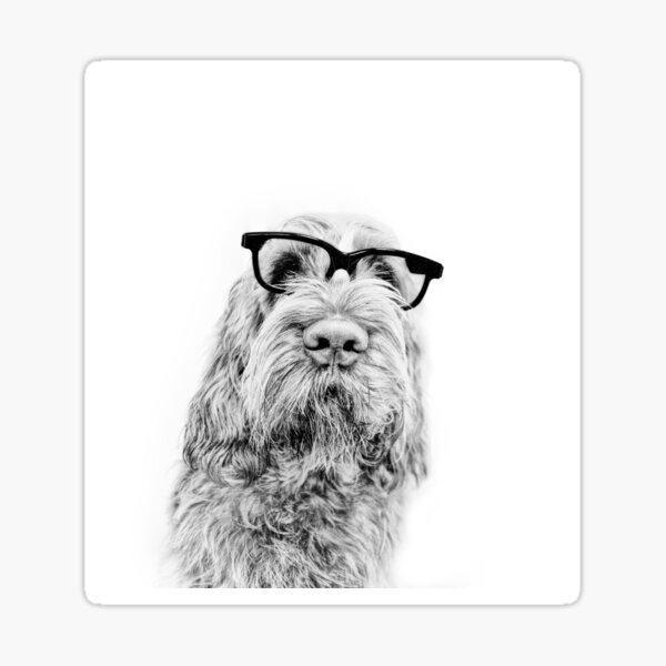 Intelligent friend Spinone Sticker