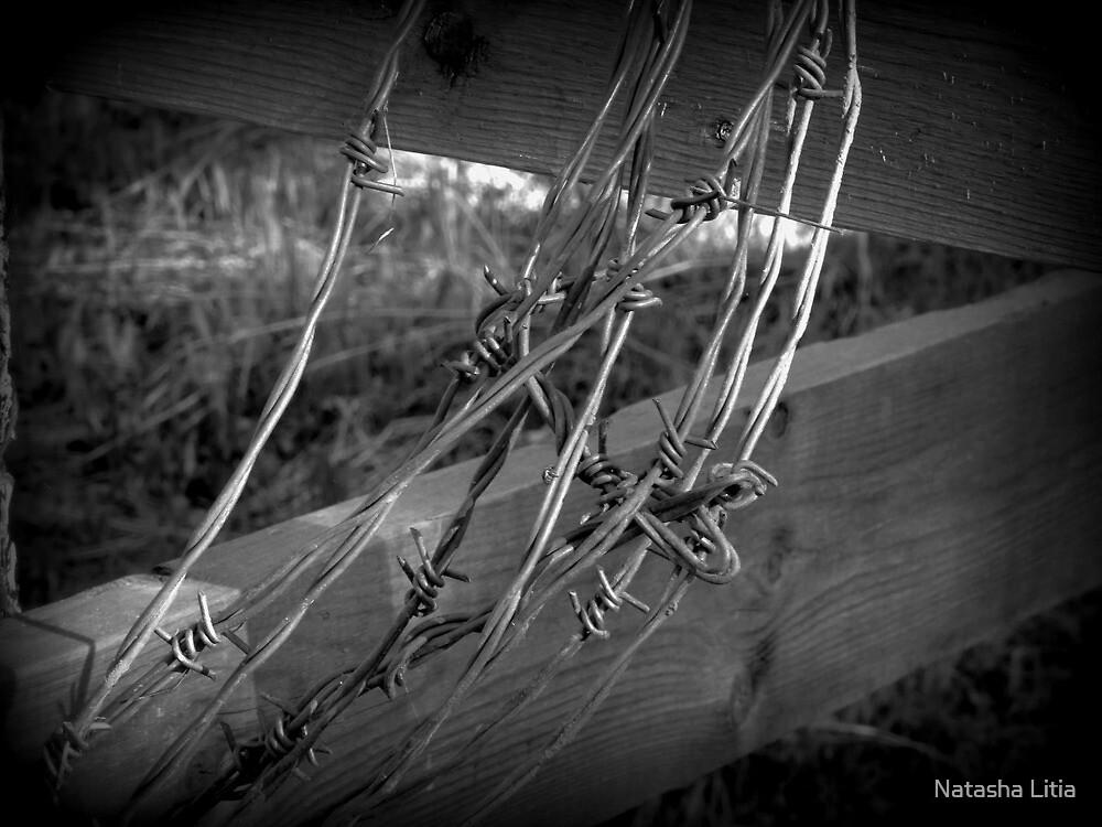 Barbed Wire - British Columbia Canada by Natasha Litia