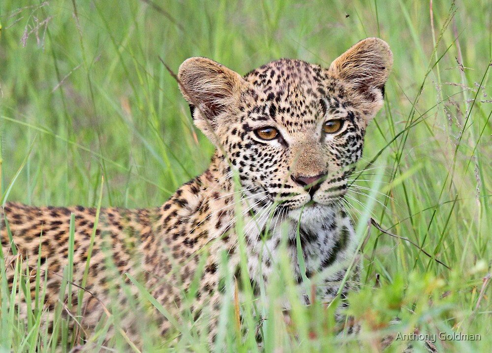 Hiding in the long grass! by Anthony Goldman