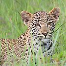 Hiding in the long grass! by jozi1
