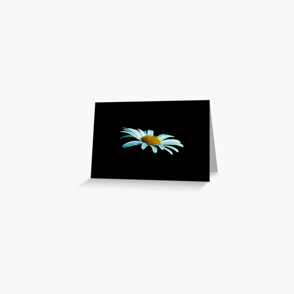 margerite on black background  Greeting Card