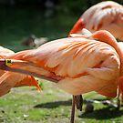 Flamingo Nap by KBritt