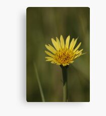 Yellow Wild Flower which I don't know the name of Canvas Print