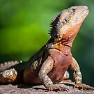 Male Water Dragon by grannyshot