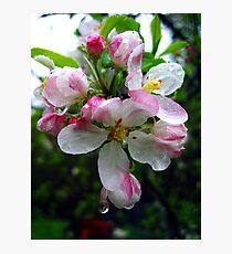 pink raindrops Photographic Print
