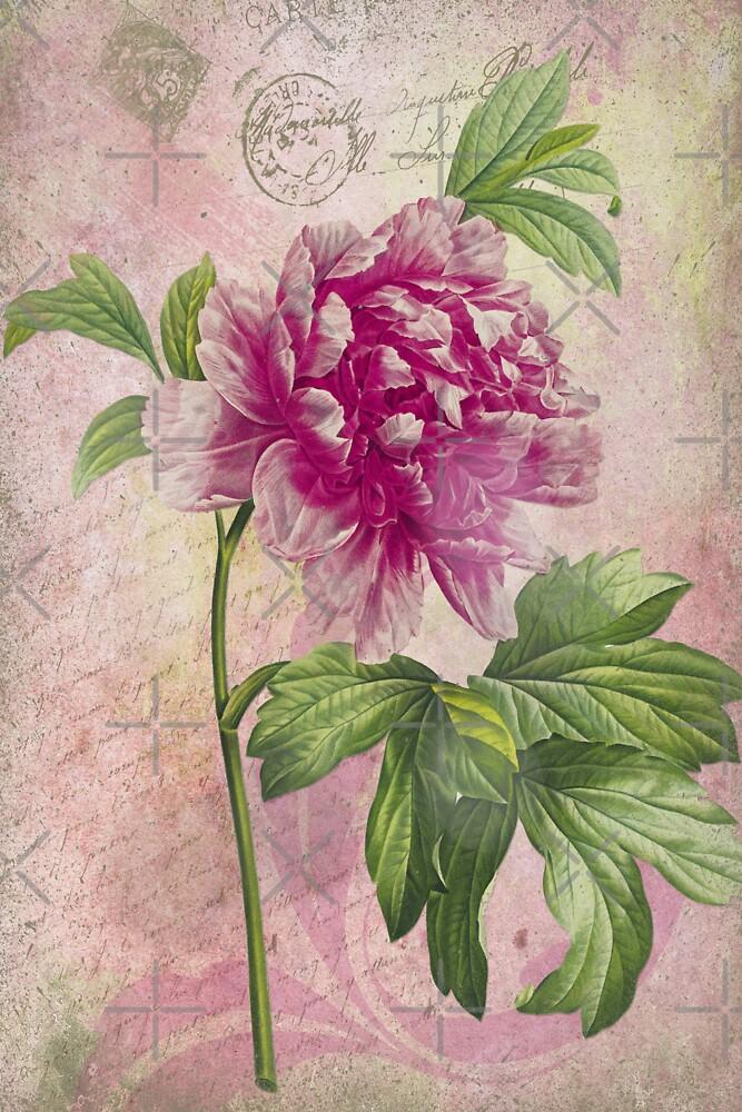 Vintage Pink Peony & French Ephemera Print - French Script and Peony Illustration by traciv