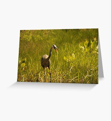 Urban 'Great Blue Heron' say's Hello! Greeting Card
