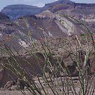 Orange Tipped Cactus - US-Mexico Border - Rio Grande - Lajitas - West Texas by seymourpics