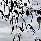 Gum leaves by Elizabeth McPhee