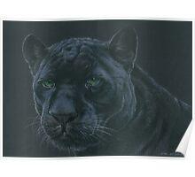 Panther colour pencil art Poster