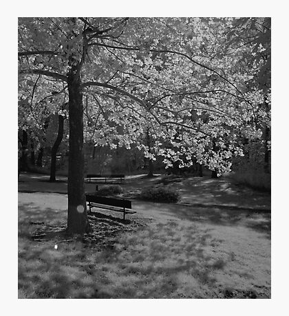 Alone in the Sun Photographic Print