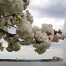 Lake Burley Griffin by NinaJoan