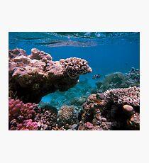 The Reef Photographic Print
