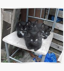 Kittens -(210613)- Digital photo/Fujifilm FinePix AX350 Poster