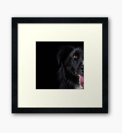 Half a dog Framed Print