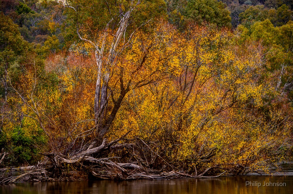 Murray River Autumn - Jingellic NSW/Walwa VIC - The HDR Experience by Philip Johnson