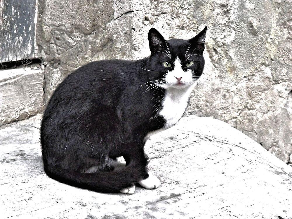 Black Cat in Sighisoara, Draculya's city by ivDAnu