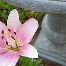 Lily and Bird Bath by johntbell
