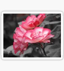 Two-tone Rose Sticker