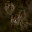 Feathery Flower by MIchelle Thompson