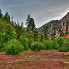 Canyon Orchards In Sedona by K D Graves Photography