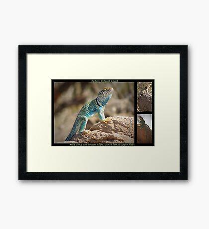 Eastern Collard Lizard ~ Collage Framed Print