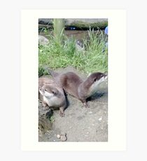 Two Otters Facing Away Art Print