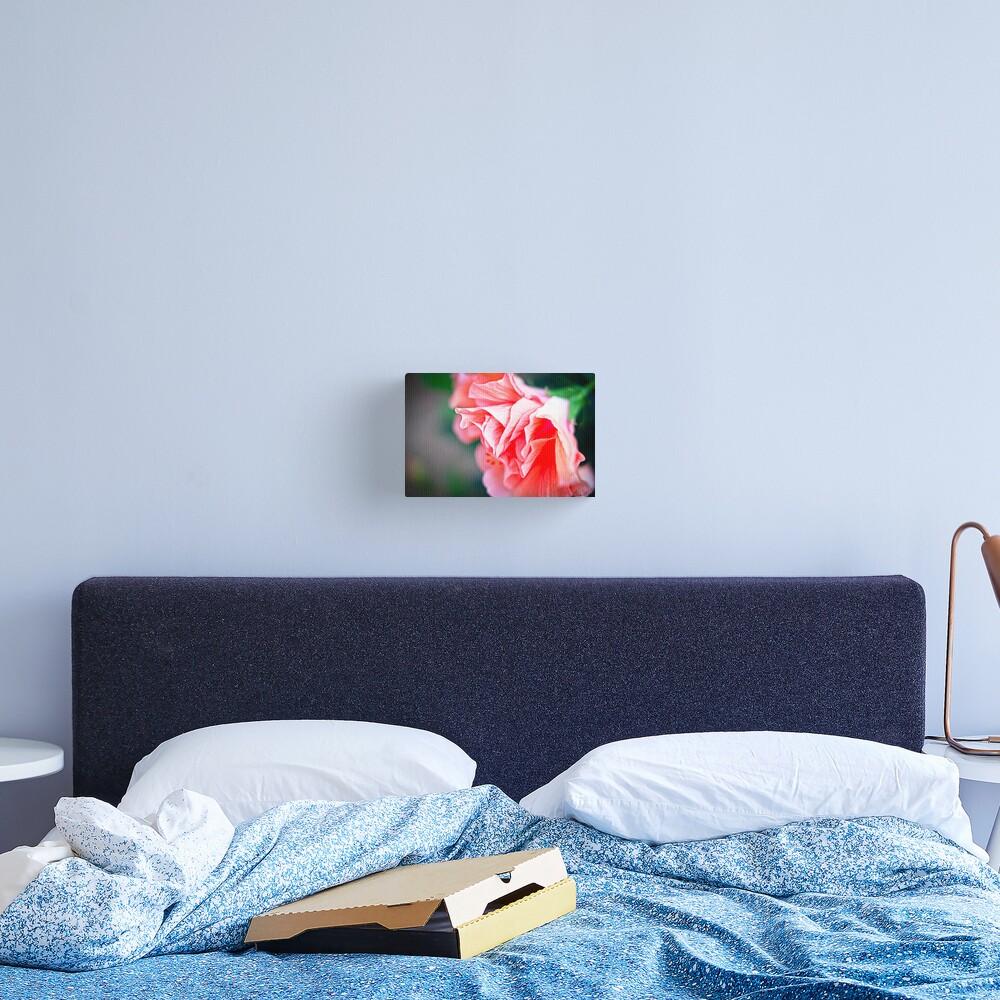 Double Peach Hibiscus II Canvas Print