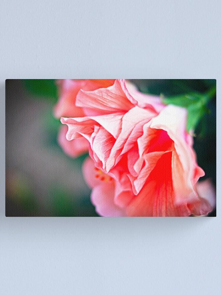 Alternate view of Double Peach Hibiscus II Canvas Print