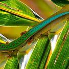 Mauritian Day Gecko on coconut palm frond - Mauritius by john  Lenagan