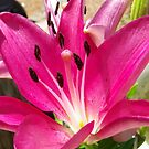 Purple Morning Lily by johntbell