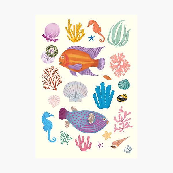 Sea Life  Photographic Print