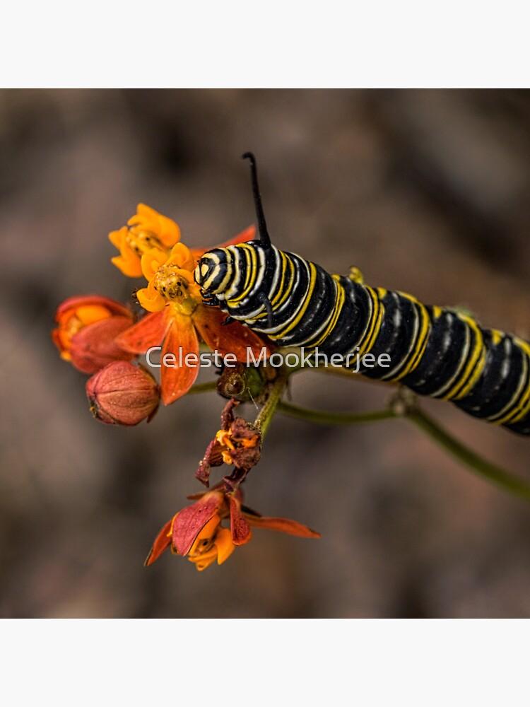 Monarch Caterpillar von celestem