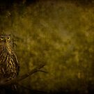 Barking Owl by Shari Mattox-Sherriff
