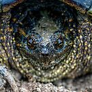 Snapping Turtle I by Ashlee White