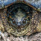 Snapping Turtle II by Ashlee White