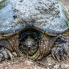 Snapping Turtle IIII by Ashlee White