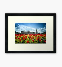 Buckingham Palace and tulips Framed Print