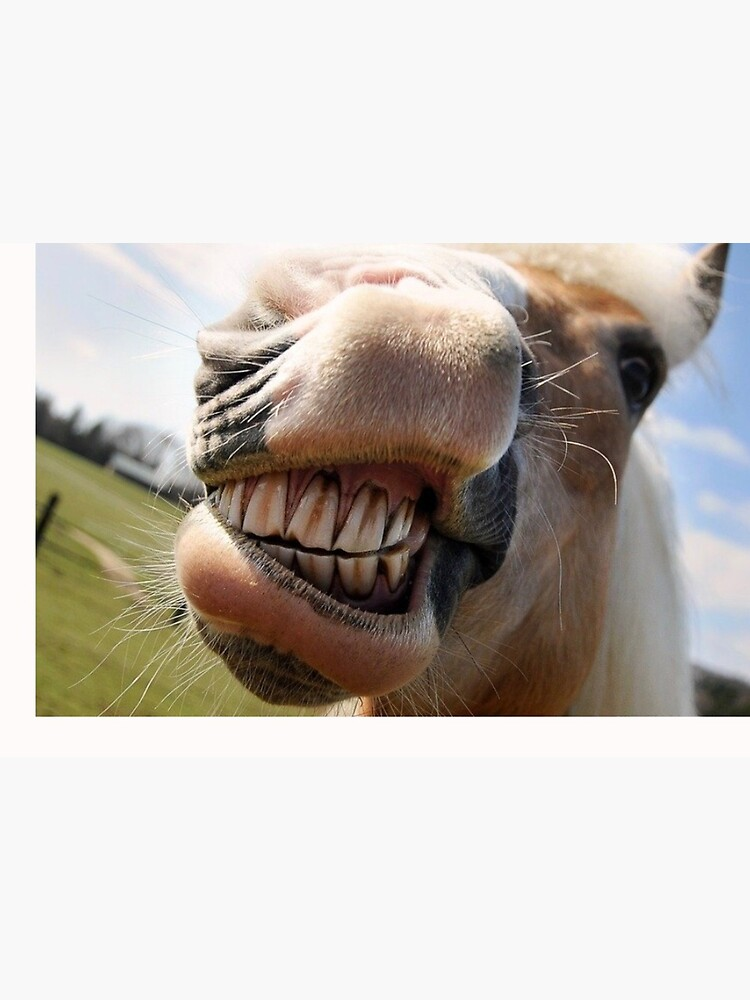 horse laughing Fun Mouth muzzle coronavirus face mask by Julieford