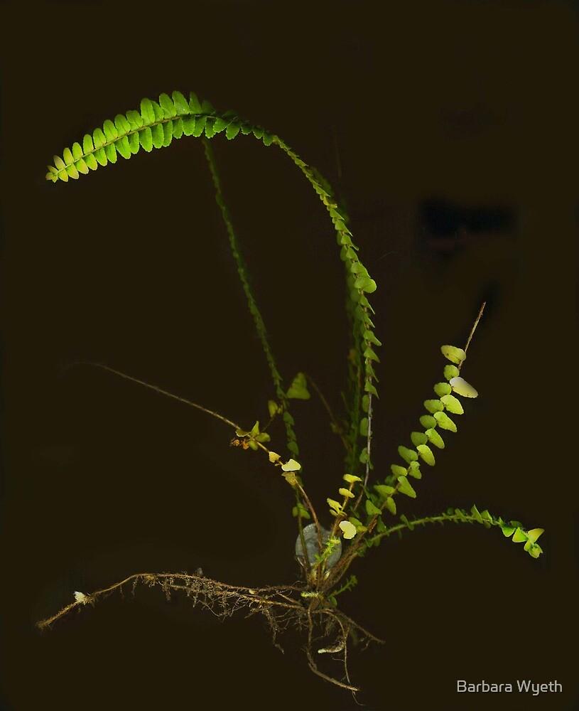 Fern and roots by Barbara Wyeth