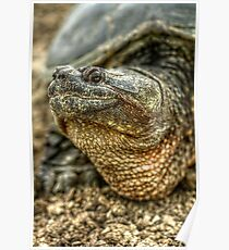 Snapping Turtle XI Poster