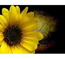 Texas Common Sunflower Photographic Print