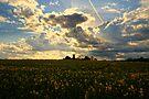 Summer Sky by Nigel Bangert