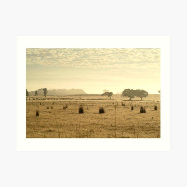 Joe Mortelliti Gallery - Dry pasture, at Mt Duneed, near Geelong, Victoria, Australia.  Art Print