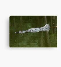 Abstract gator Canvas Print