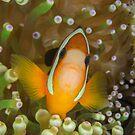 Clark's Anemonefish - Amphiprion clarkii by Andrew Trevor-Jones