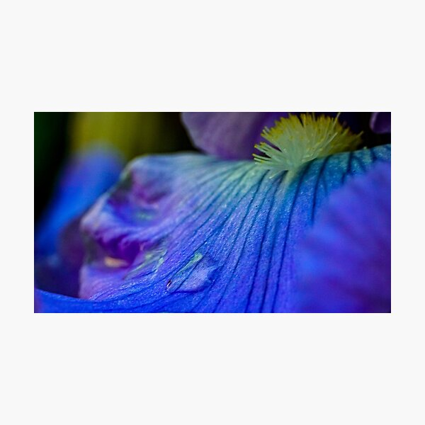 Mouth of an Iris Photographic Print