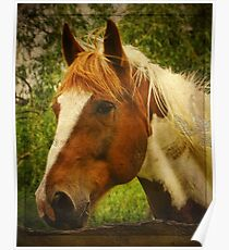 Horse at the Fence Poster